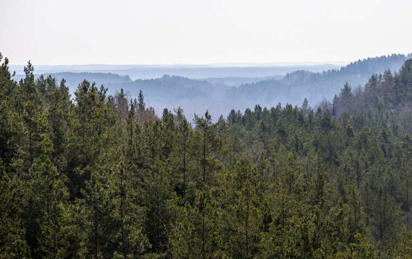 JT biologinės įvairovės konvencijos susitikime – apie ypatingą Lietuvos dėmesį miškams ir pelkėms