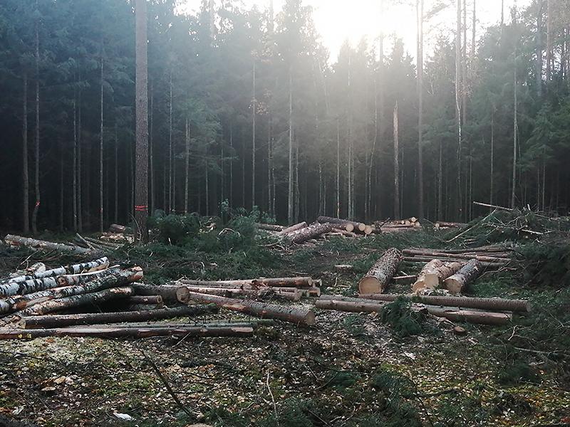 Žmonės kūrėsi prie miško, trokšdami gamtos prieglobsčio, tačiau nė nenumanė, kad čia vyks plyni kirtimai.